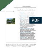 Ecosistema Manglar.docx