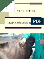 Anatomia Del Torax-Abdomen