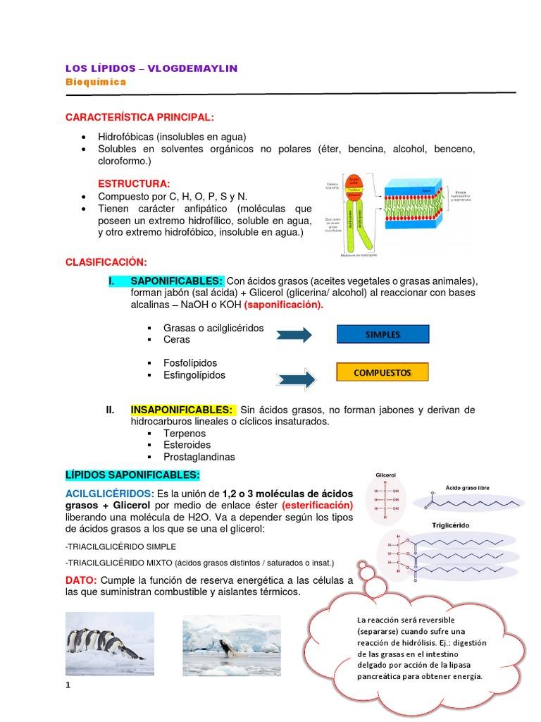 metabolismo anaerobico lactico - Información general Un
