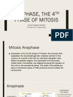 Anaphase, The 4th Phase of Mitosis