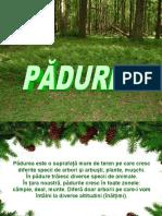 0padurea-120817132010-phpapp01