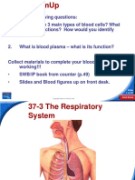 The Respiratory System (1)