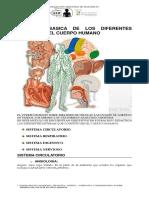 Anatomia Basica de Los Diferentes Aparatos Del Cuerpo Humano (3)