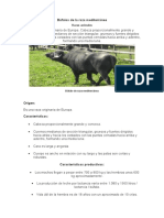 Búfalos de La Raza Mediterránea y Murrah