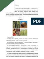 MARCO (1).docx