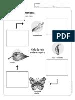 ciclo de vida la mariposa.pdf