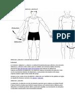 Qué Son Los Músculos Abductores y Aductores