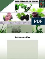 Proceso Productivo de La Mora - Copia