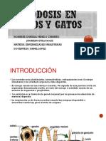 cestodos-dipylidium-caninum
