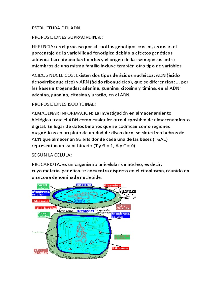 Estructura Del Adn ácidos Nucleicos Adn