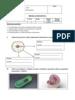 CN Prueba Celula Adaptación