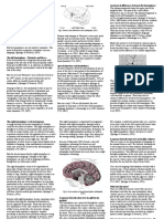 lateralization of language functions.pdf