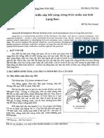 The Development of Star Anise Tree