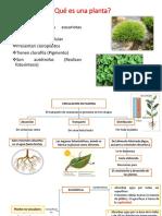 Circulacion en Plantas No Vasculares (1)