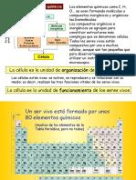 delatomoalacelula-091203075227-phpapp01