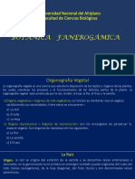 Botánica Fanerogámica, Raíz 2018-II