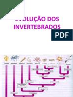 biossungui e evolução.pdf