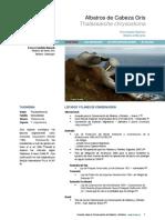 ACAP Albatros de Cabeza Gris SP1.1