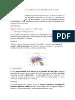 informe-celula.docx