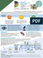 Infografia Beauveria Bassiana VF
