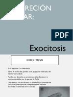 Presentacion_exocitosis (1)