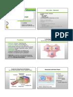 Leber,Extrahepat. Gallenwege Und Pankreas (1)