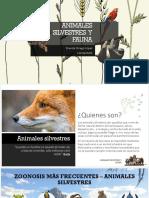 Animales Silvestres y Fauna