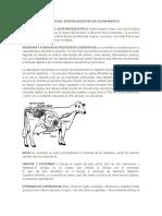 Anatomia y Fisiologia Del Sistema Digestivo de Los Rumiantes