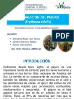 presentacion  pajuro.pptx