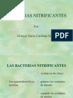 bacterias_nitrificantes