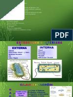 Microbiología. Bacterias.pptx