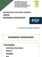 miembroinferior2 IMPRIMIR