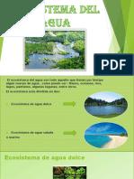 ecosistema del agua