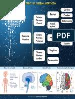 Sistema nervioso central imagen.pdf