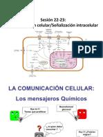 Clase 22-23 Señalización Intracelular