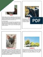 Album de Animales de Tacna