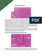 Imagenes de sistema endocrino.docx