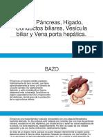 Bazo, Páncreas, Higado, Conductos Biliares, Vesicula Biliar y Vena Porta Hepatica