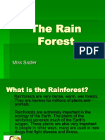 The Rain Forest PP