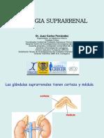 GLANDULAS SUPRARRENALES.pdf