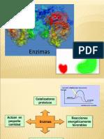 3. enzimas