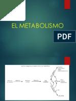 Metabolismos Ciz Parte 1 (1)