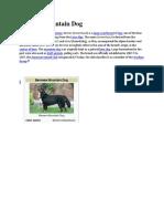 Burmese Mountain Dog