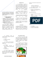 Triptico de Carbohidratos.docx