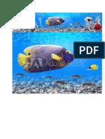 fish  images.docx
