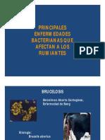 enfermedades y bacterias