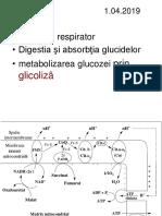 Digestie Glicoliza Krebs 2018