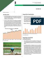 Informe-coyuntura-arroz-280818_0.docx