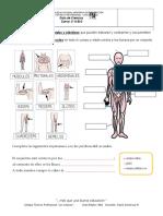 Guía Ciencias-Músculos