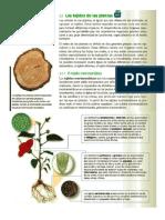 Tejidos Vegetales PDF